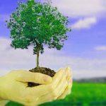 Cómo el uso de los contenedores de reciclaje ayuda al medio ambiente - Reciclaje 101