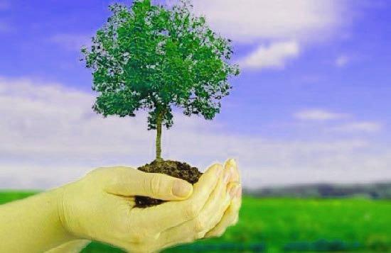 investigacion-del-medio-ambiente
